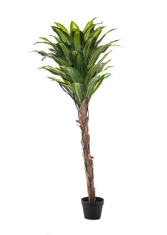 Προυντζόπουλος Τεχνητά Φυτά - Δράκαινα