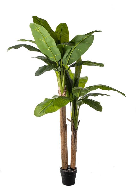 Προυντζόπουλος Τεχνητά Φυτά - Real Touch Banana Tree