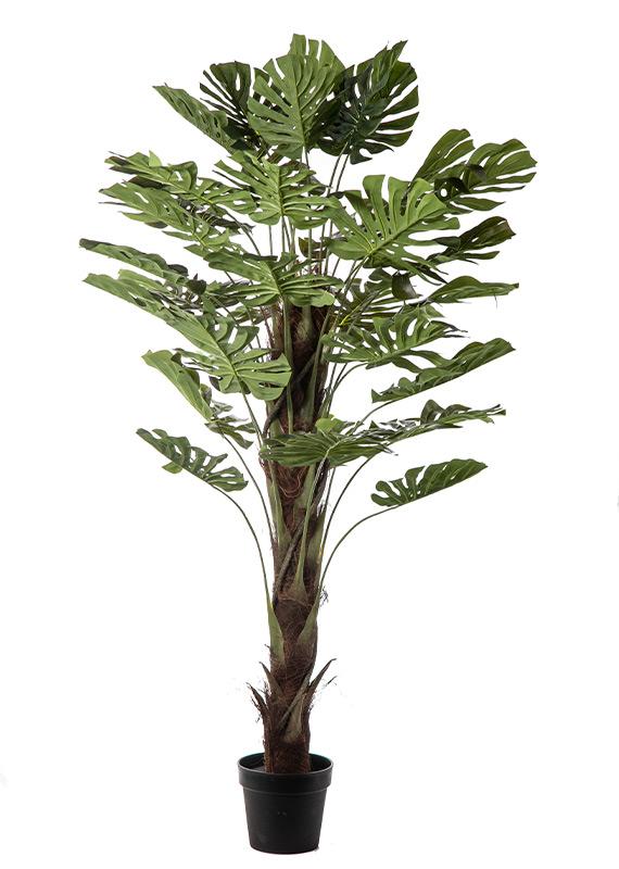 Προυντζόπουλος Τεχνητά Φυτά - Real Touch Σχιστόφυλλο
