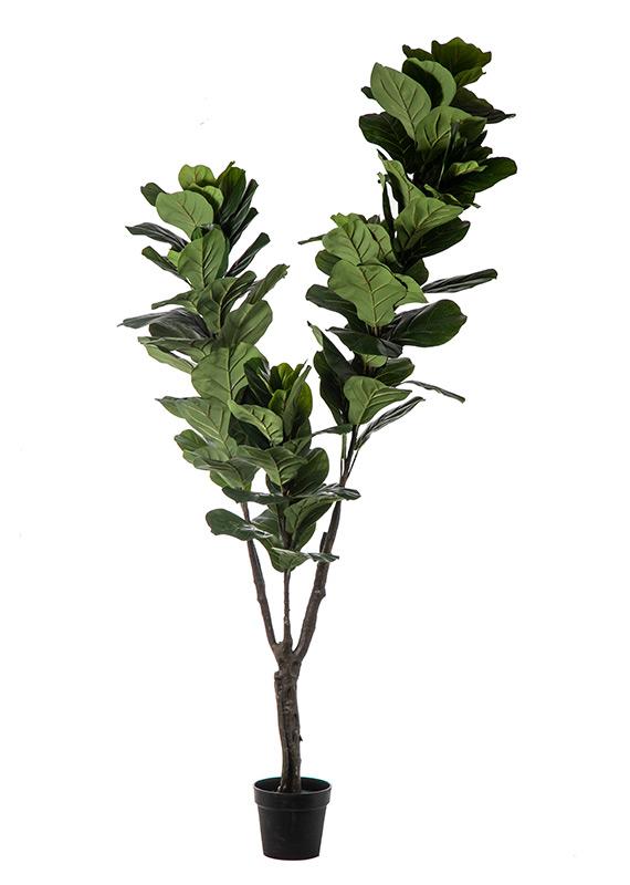 Προυντζόπουλος Τεχνητά Φυτά - Real Touch Φίκος
